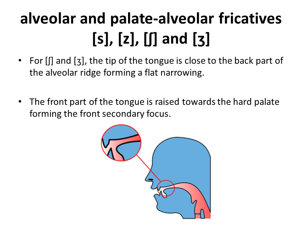 alveolar and palate-alveolar fricatives [s], [z], [ʃ] and [ʒ]
